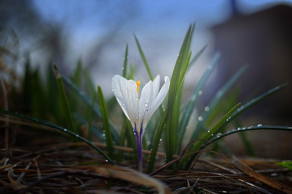 Communiceren met bloemen en  planten